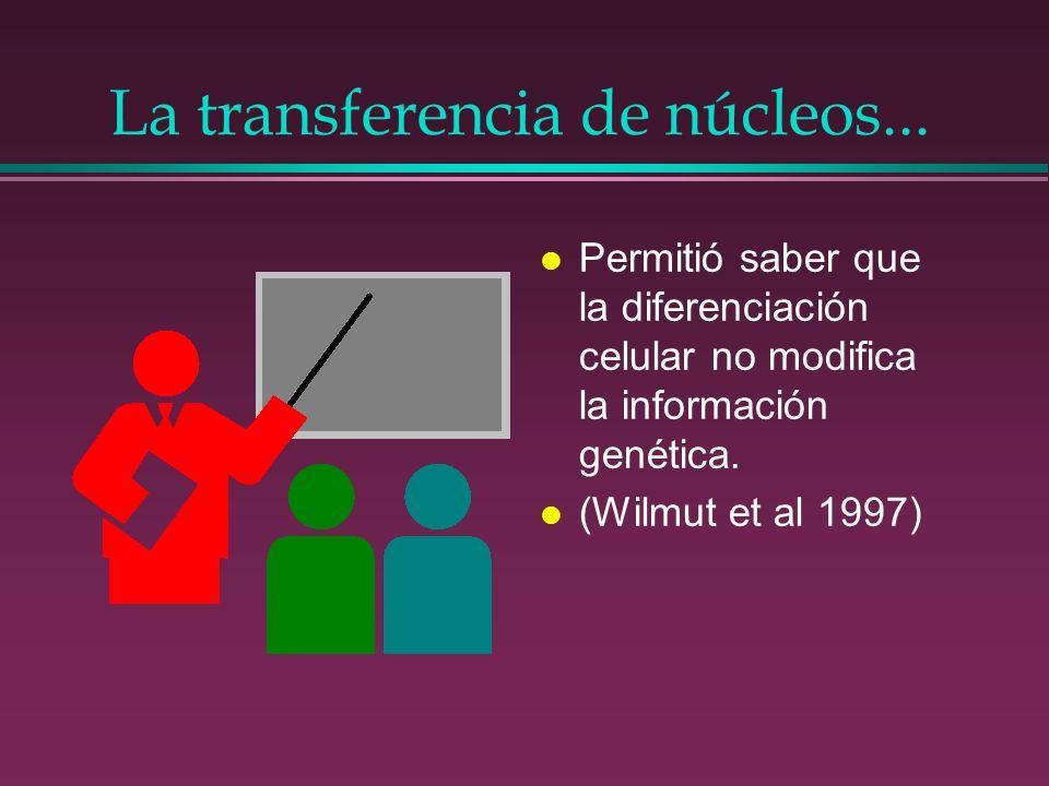 La transferencia de núcleos... l Permitió saber que la diferenciación celular no modifica la información genética. l (Wilmut et al 1997)