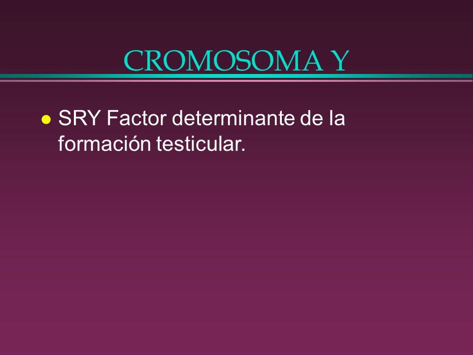 CROMOSOMA Y l SRY Factor determinante de la formación testicular.