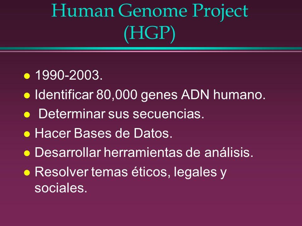 Human Genome Project (HGP) l 1990-2003. l Identificar 80,000 genes ADN humano. l Determinar sus secuencias. l Hacer Bases de Datos. l Desarrollar herr