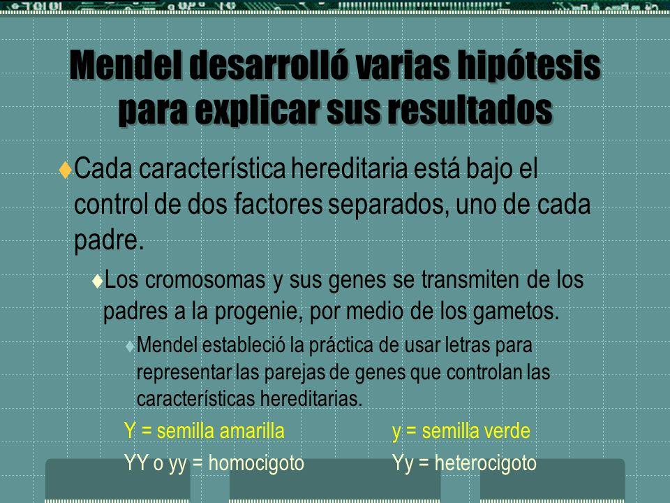 Mendel desarrolló varias hipótesis para explicar sus resultados Cada característica hereditaria está bajo el control de dos factores separados, uno de