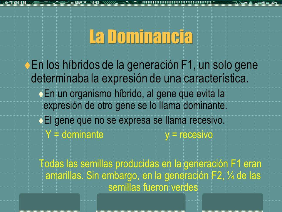La Dominancia En los híbridos de la generación F1, un solo gene determinaba la expresión de una característica. En un organismo híbrido, al gene que e