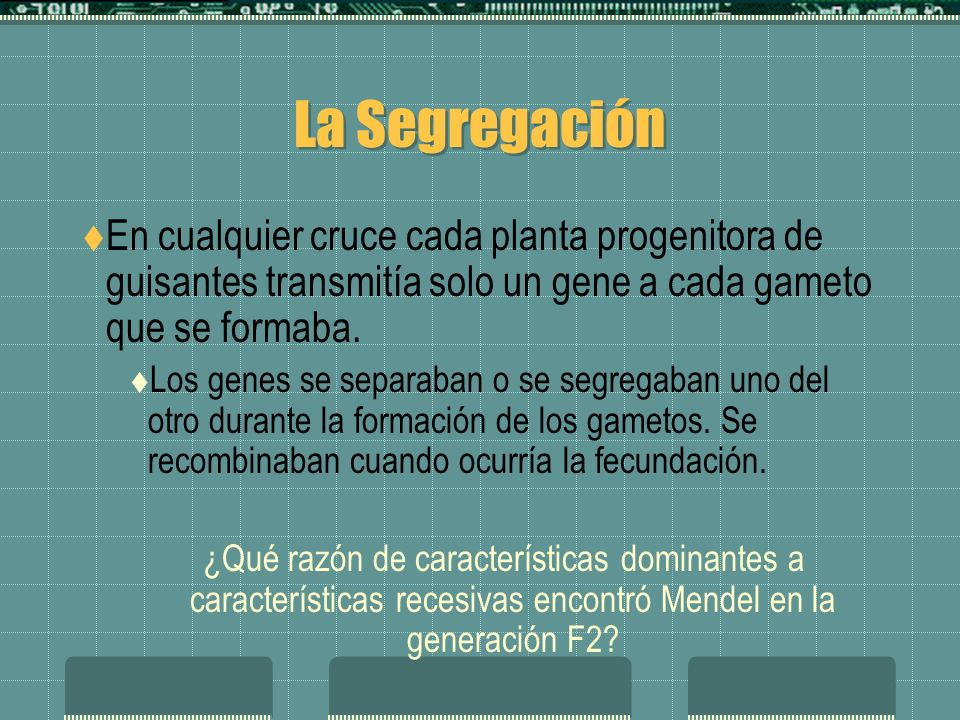La Segregación En cualquier cruce cada planta progenitora de guisantes transmitía solo un gene a cada gameto que se formaba. Los genes se separaban o