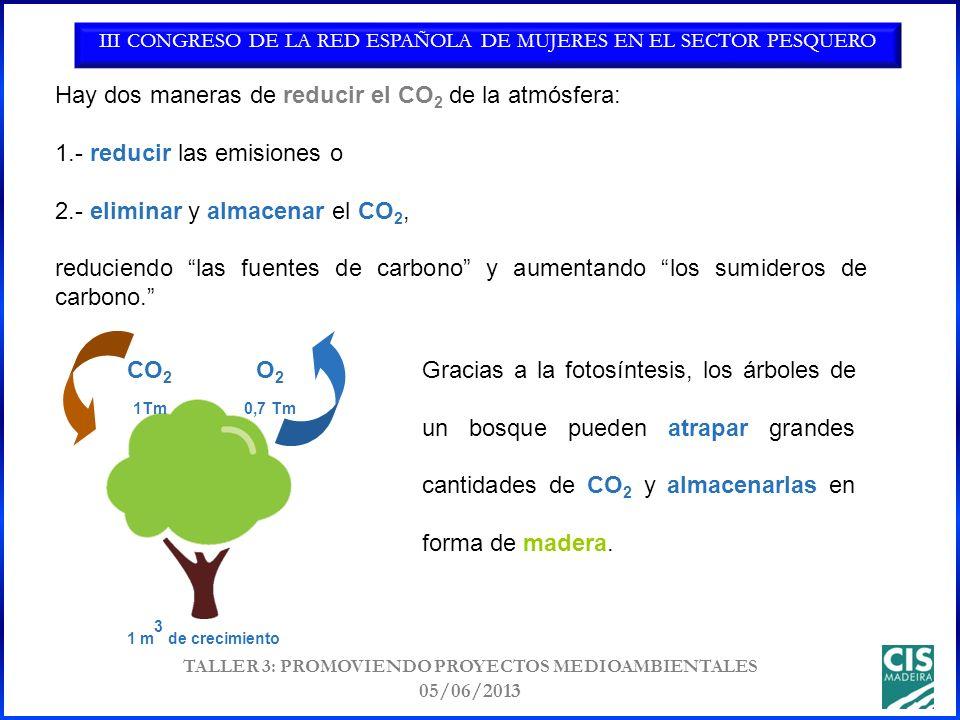 III CONGRESO DE LA RED ESPAÑOLA DE MUJERES EN EL SECTOR PESQUERO TALLER 3: PROMOVIENDO PROYECTOS MEDIOAMBIENTALES 05/06/2013 Gracias a la fotosíntesis, los árboles de un bosque pueden atrapar grandes cantidades de CO 2 y almacenarlas en forma de madera.