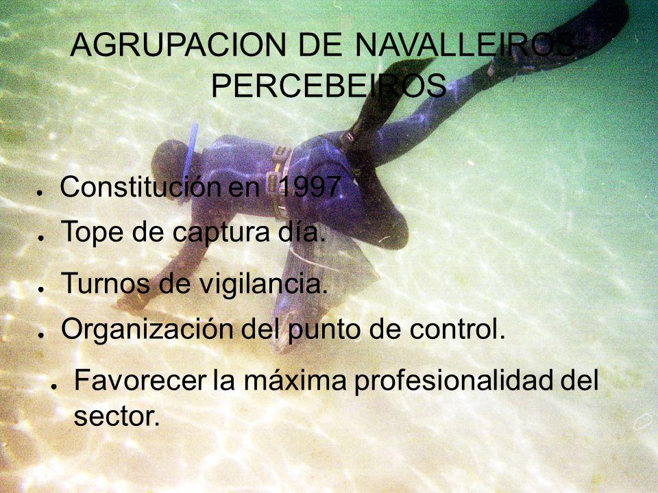 AGRUPACION DE NAVALLEIROS- PERCEBEIROS Constitución en 1997 Tope de captura día. Favorecer la máxima profesionalidad del sector. Turnos de vigilancia.