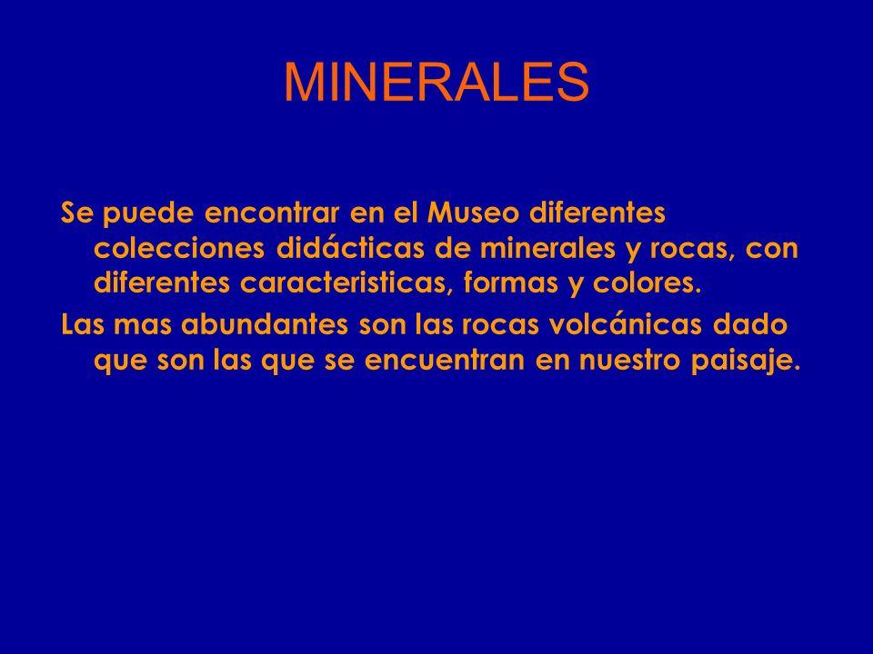MINERALES Se puede encontrar en el Museo diferentes colecciones didácticas de minerales y rocas, con diferentes caracteristicas, formas y colores. Las