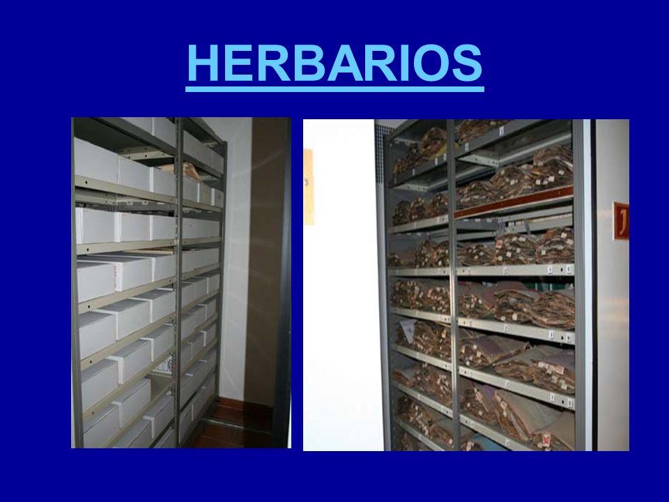HERBARIOS