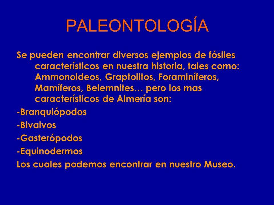 PALEONTOLOGÍA Se pueden encontrar diversos ejemplos de fósiles característicos en nuestra historia, tales como: Ammonoideos, Graptolitos, Foraminífero