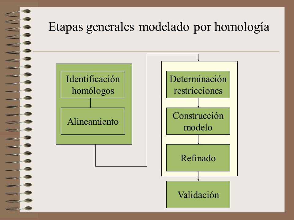 Identificación homólogos Alineamiento Determinación restricciones Construcción modelo Refinado Validación Etapas generales modelado por homología