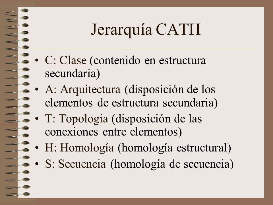 Jerarquía CATH C: Clase (contenido en estructura secundaria) A: Arquitectura (disposición de los elementos de estructura secundaria) T: Topología (dis