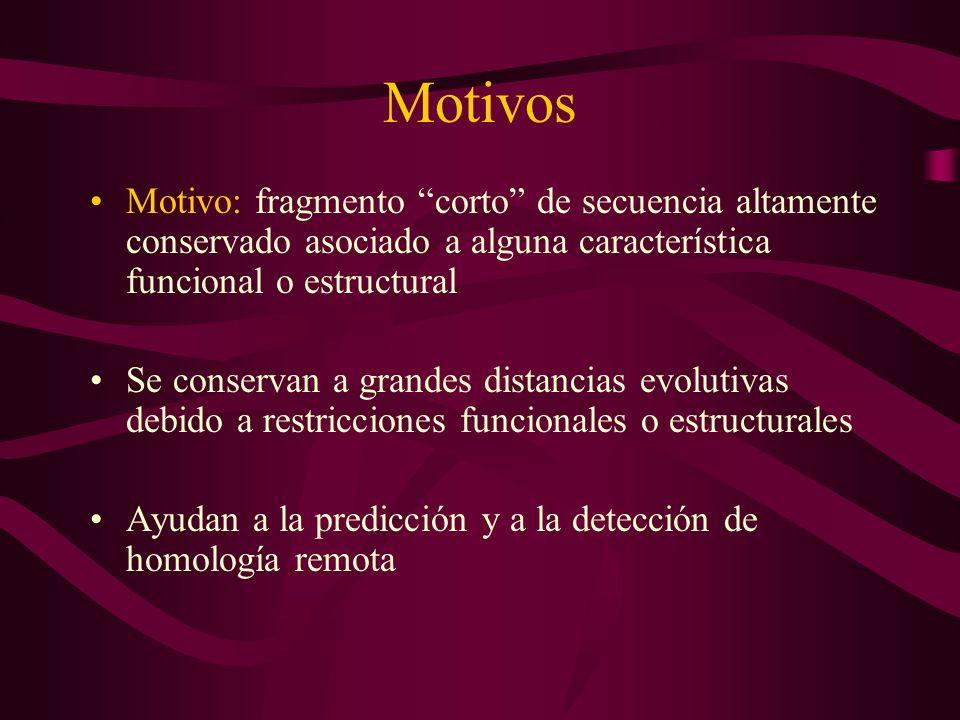 Motivos Motivo: fragmento corto de secuencia altamente conservado asociado a alguna característica funcional o estructural Se conservan a grandes distancias evolutivas debido a restricciones funcionales o estructurales Ayudan a la predicción y a la detección de homología remota