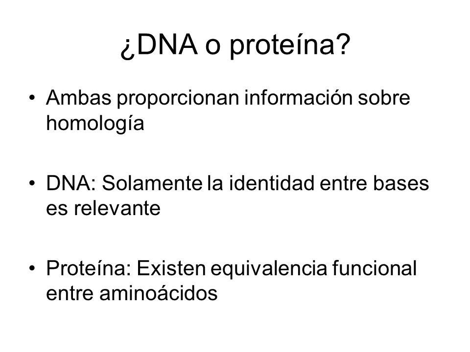¿DNA o proteína? Ambas proporcionan información sobre homología DNA: Solamente la identidad entre bases es relevante Proteína: Existen equivalencia fu