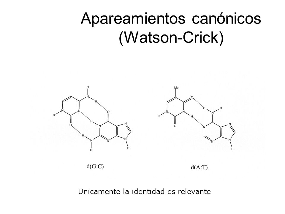 Apareamientos canónicos (Watson-Crick) Unicamente la identidad es relevante