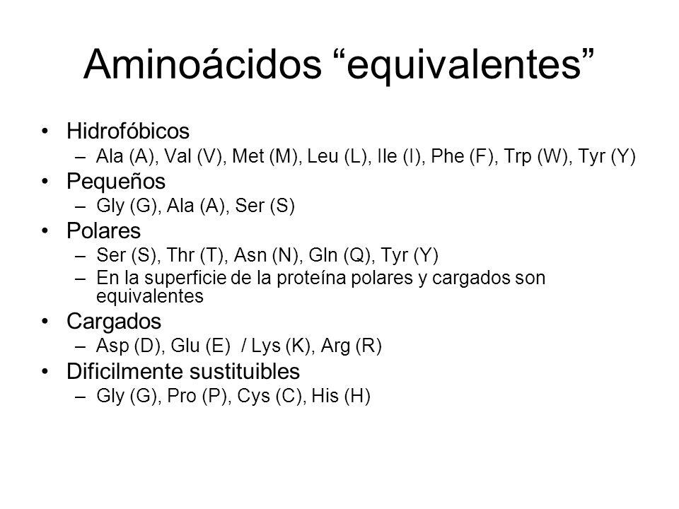 Aminoácidos equivalentes Hidrofóbicos –Ala (A), Val (V), Met (M), Leu (L), Ile (I), Phe (F), Trp (W), Tyr (Y) Pequeños –Gly (G), Ala (A), Ser (S) Pola