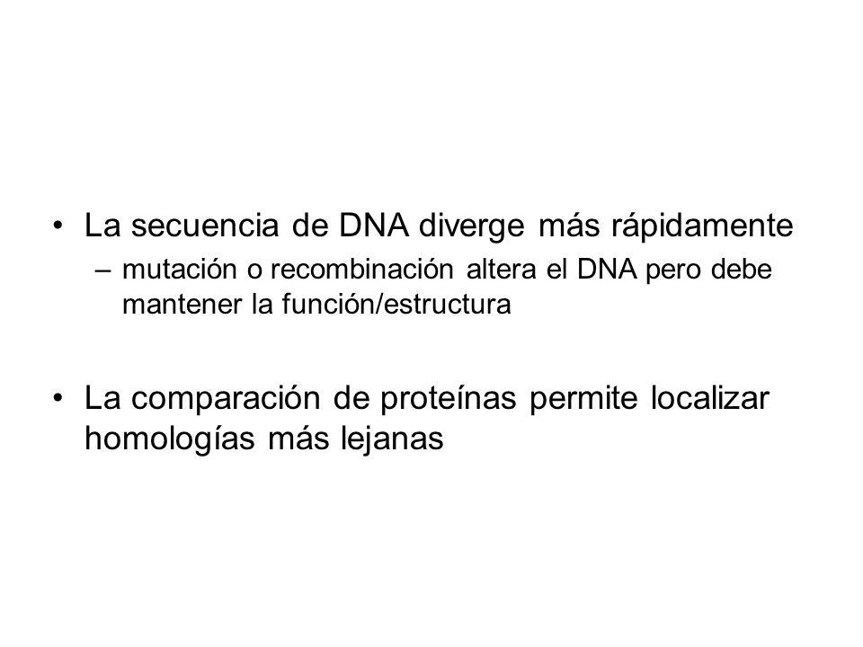 La secuencia de DNA diverge más rápidamente –mutación o recombinación altera el DNA pero debe mantener la función/estructura La comparación de proteín