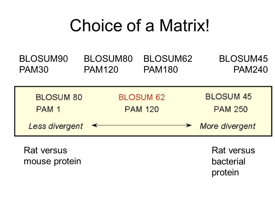 Rat versus mouse protein Rat versus bacterial protein BLOSUM90 PAM30 BLOSUM45 PAM240 BLOSUM80 PAM120 BLOSUM62 PAM180 Choice of a Matrix!