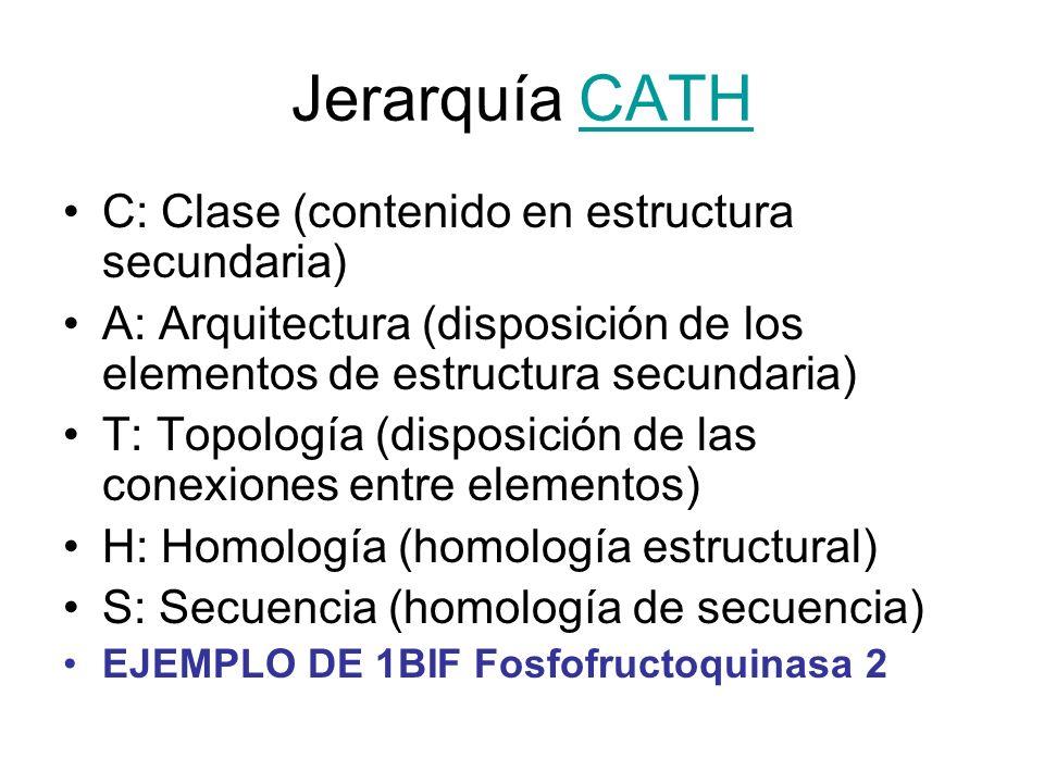 Jerarquía CATHCATH C: Clase (contenido en estructura secundaria) A: Arquitectura (disposición de los elementos de estructura secundaria) T: Topología
