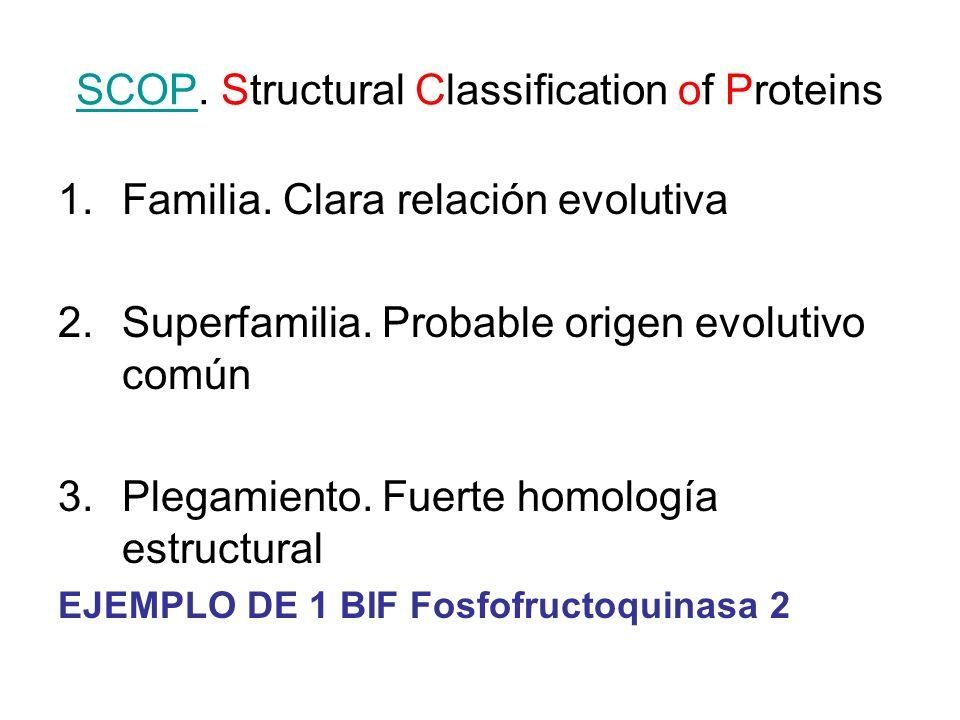 SCOPSCOP. Structural Classification of Proteins 1.Familia. Clara relación evolutiva 2.Superfamilia. Probable origen evolutivo común 3.Plegamiento. Fue