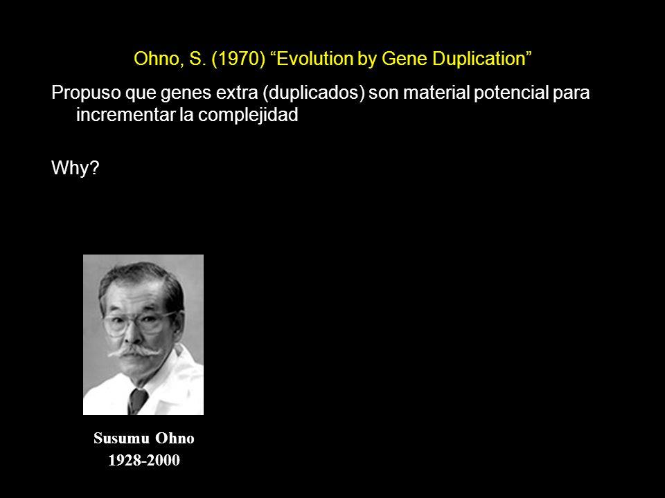 Ohno, S. (1970) Evolution by Gene Duplication Susumu Ohno 1928-2000 Propuso que genes extra (duplicados) son material potencial para incrementar la co