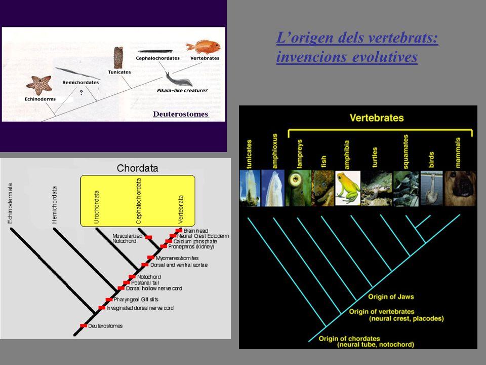Lorigen dels vertebrats: invencions evolutives