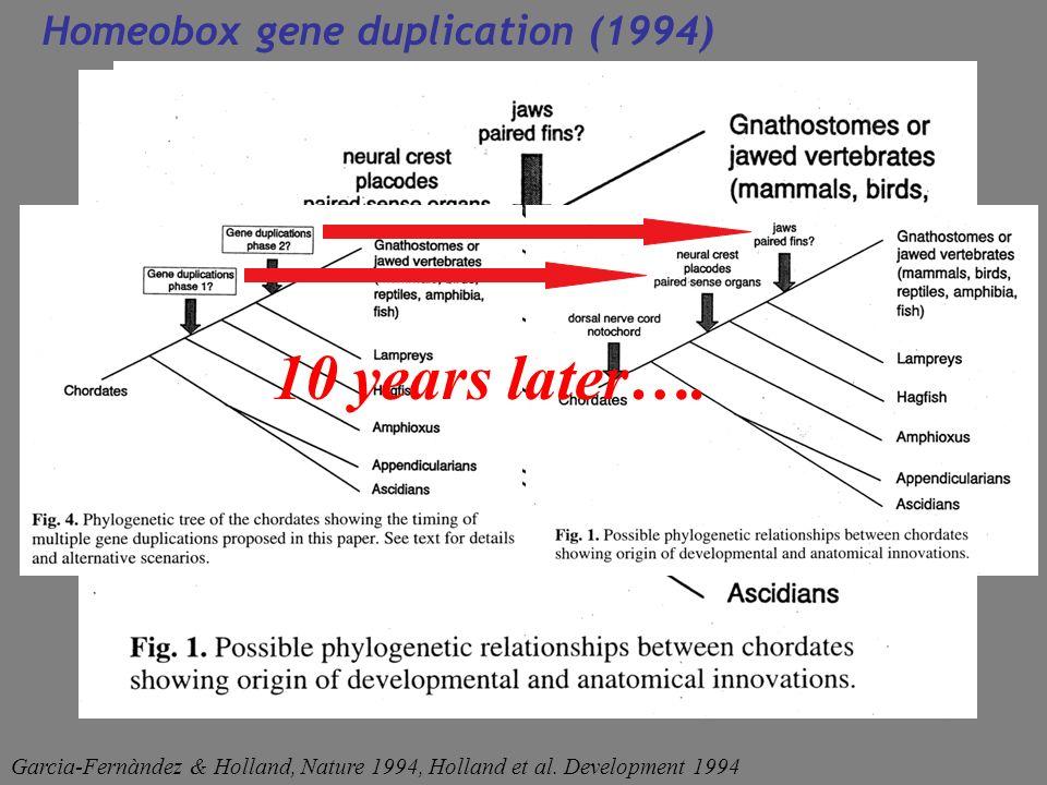 10 years later…. Homeobox gene duplication (1994) Garcia-Fernàndez & Holland, Nature 1994, Holland et al. Development 1994