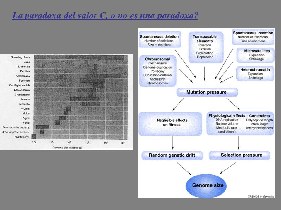 La paradoxa del valor C, o no es una paradoxa?