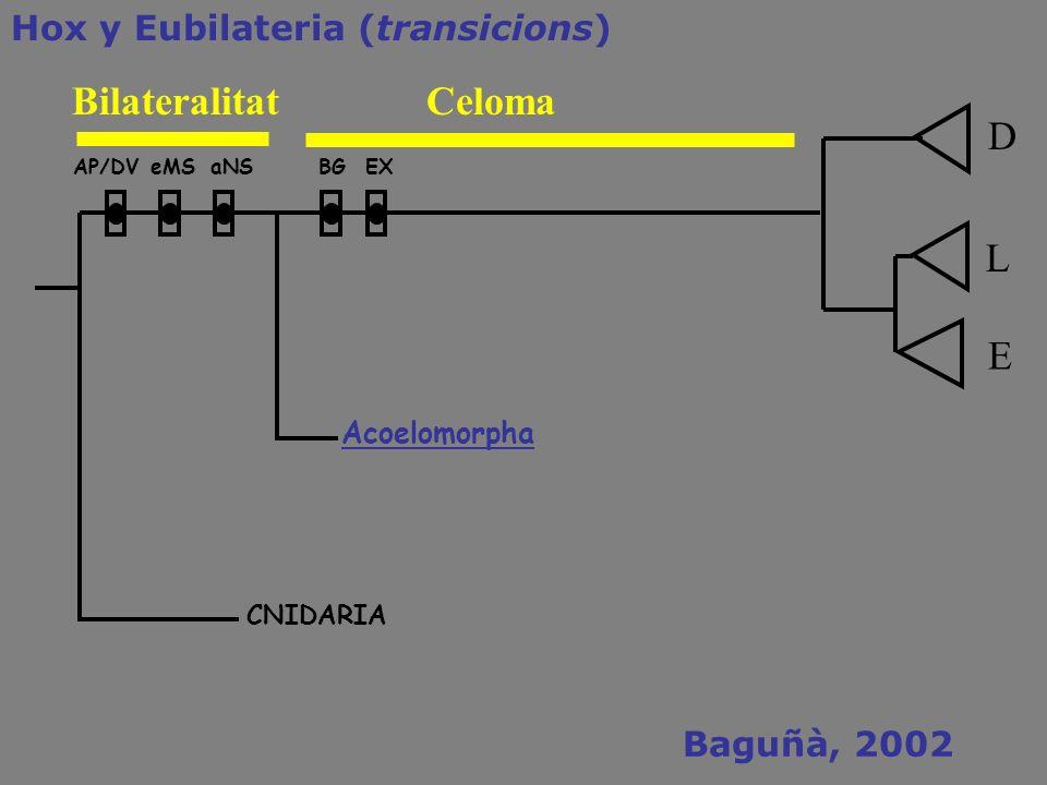 AP/DVeMSBGaNSEX CNIDARIA Acoelomorpha Hox y Eubilateria (transicions) L E D BilateralitatCeloma Baguñà, 2002