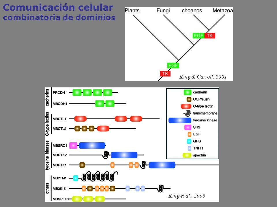 Comunicación celular combinatoria de dominios King & Carroll, 2001 King et al., 2003
