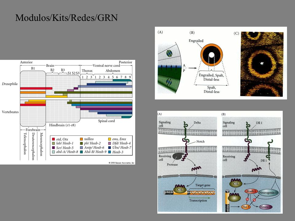 Modulos/Kits/Redes/GRN