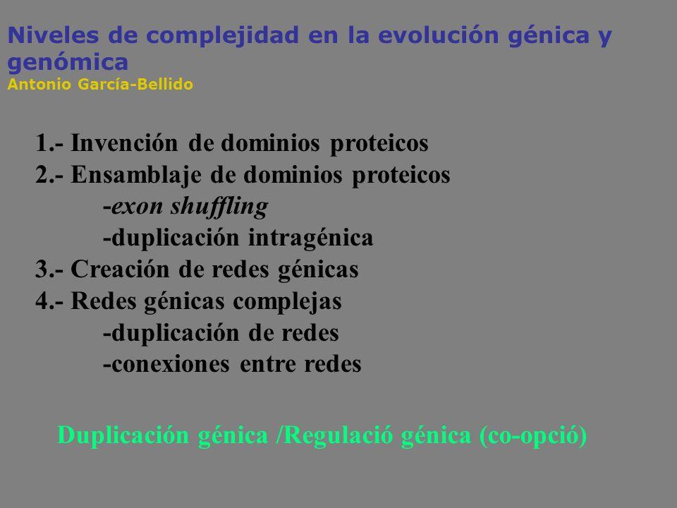 1.- Invención de dominios proteicos 2.- Ensamblaje de dominios proteicos -exon shuffling -duplicación intragénica 3.- Creación de redes génicas 4.- Re