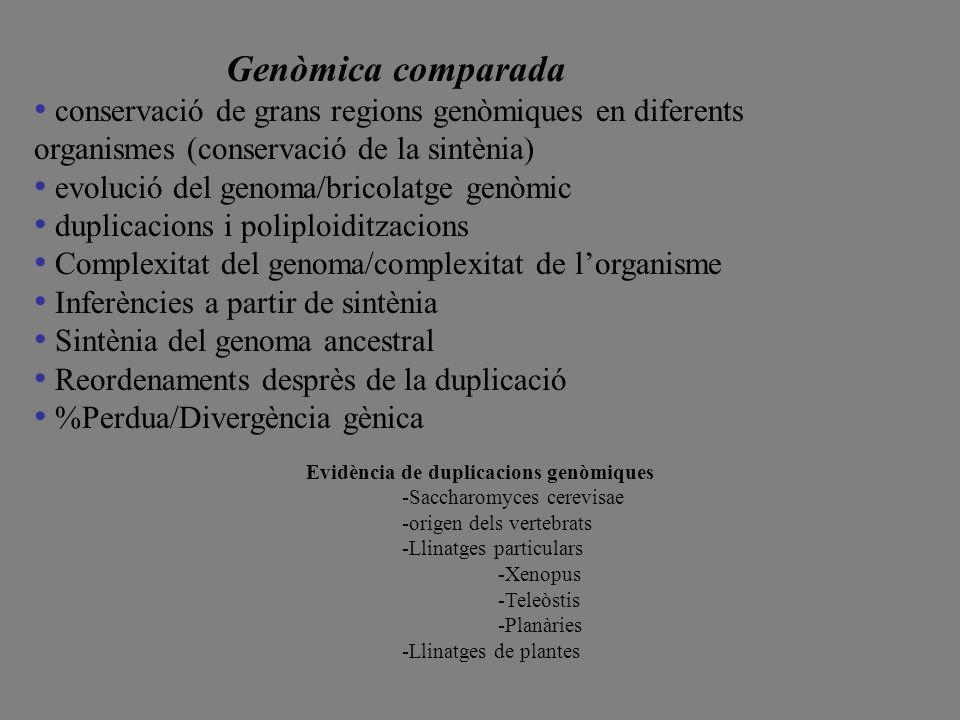 Genòmica comparada conservació de grans regions genòmiques en diferents organismes (conservació de la sintènia) evolució del genoma/bricolatge genòmic