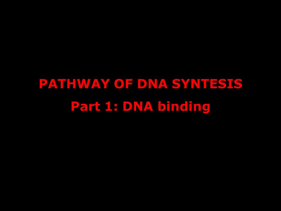 PATHWAY OF DNA SYNTESIS Part 1: DNA binding