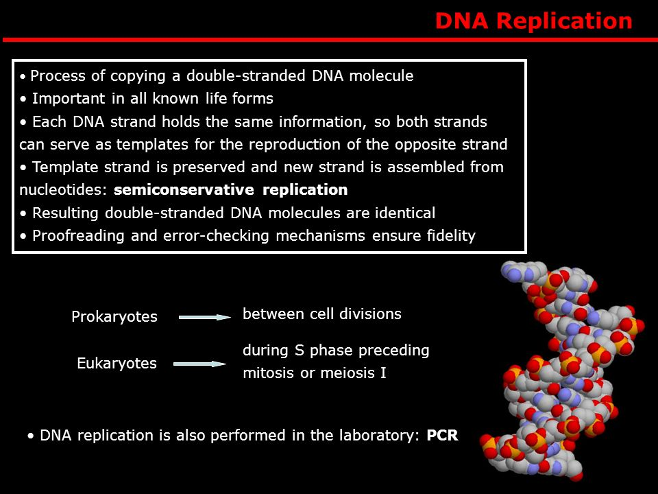 Process of copying a double-stranded DNA molecule Important in all known life forms Each DNA strand holds the same information, so both strands can serve as templates for the reproduction of the opposite strand Template strand is preserved and new strand is assembled from nucleotides: semiconservative replication Resulting double-stranded DNA molecules are identical Proofreading and error-checking mechanisms ensure fidelity DNA replication is also performed in the laboratory: PCR Prokaryotes Eukaryotes between cell divisions during S phase preceding mitosis or meiosis I DNA Replication