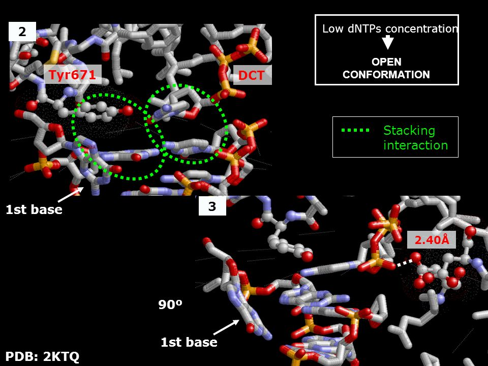 90º 2.40Å 3 2 Low dNTPs concentration OPEN CONFORMATION Tyr671 1st base DCT PDB: 2KTQ 1st base Stacking interaction