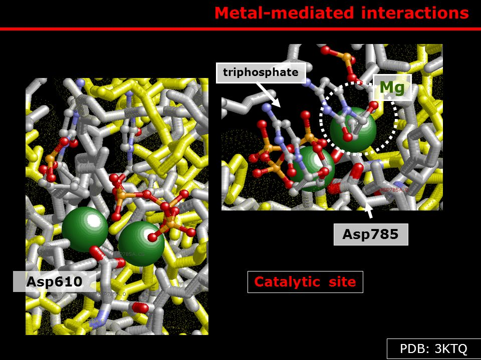 Metal-mediated interactions Asp785 Catalytic site triphosphate Mg Asp610 PDB: 3KTQ
