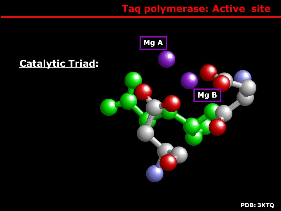 Taq polymerase: Active site Mg A Mg B Catalytic Triad: PDB: 3KTQ