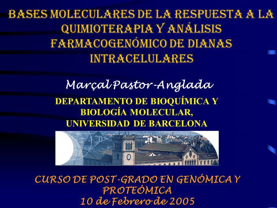 BASES MOLECULARES DE LA RESPUESTA A LA QUIMIOTERAPIA Y ANÁLISIS FARMACOGENÓMICO DE DIANAS INTRACELULARES Marçal Pastor-Anglada DEPARTAMENTO DE BIOQUÍM