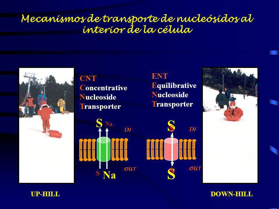 UP-HILLDOWN-HILL S S S S S Na S IN OUT IN OUT CNT Concentrative Nucleoside Transporter ENT Equilibrative Nucleoside Transporter Mecanismos de transpor