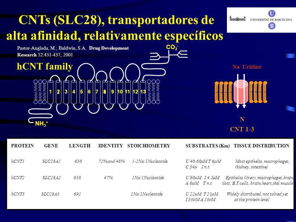 NH 3 + CO 2 - 12345678910111213 28 hCNT family CNTs (SLC28), transportadores de alta afinidad, relativamente específicos N CNT 1-3 NaUridine PROTEIN G