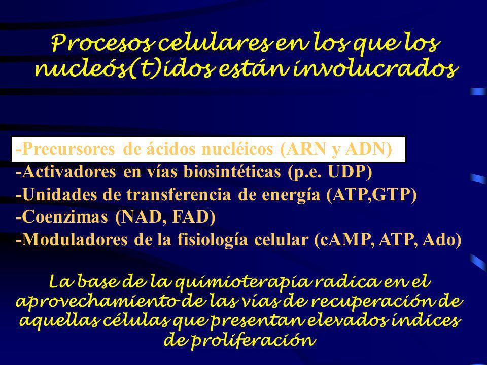 Procesos celulares en los que los nucleós(t)idos están involucrados -Precursores de ácidos nucléicos (ARN y ADN) -Activadores en vías biosintéticas (p