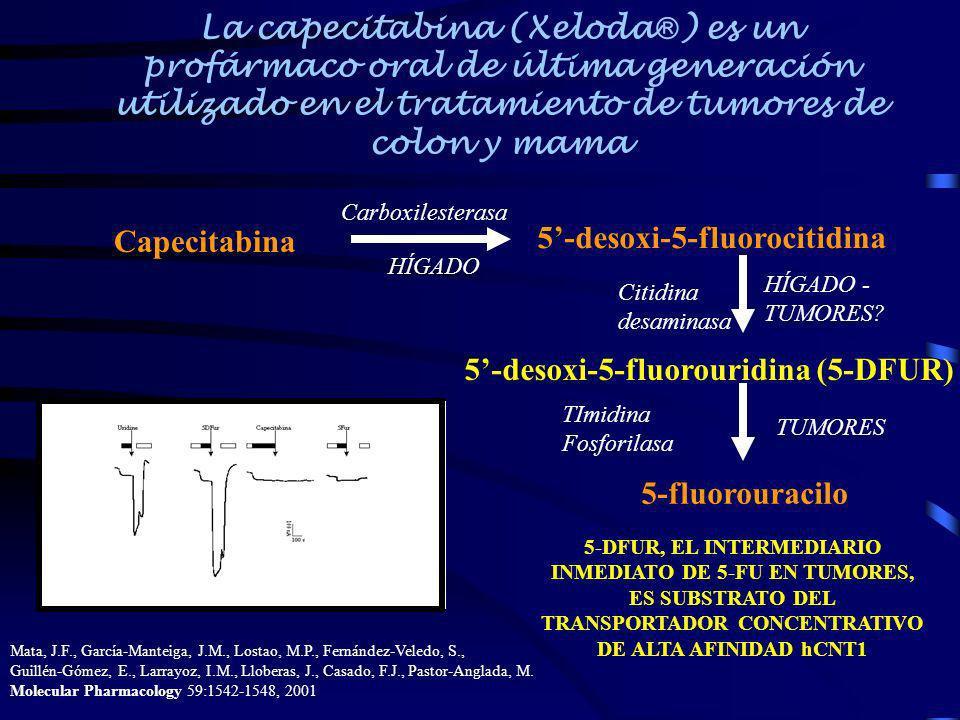 La capecitabina (Xeloda ) es un profármaco oral de última generación utilizado en el tratamiento de tumores de colon y mama Capecitabina 5-desoxi-5-fl