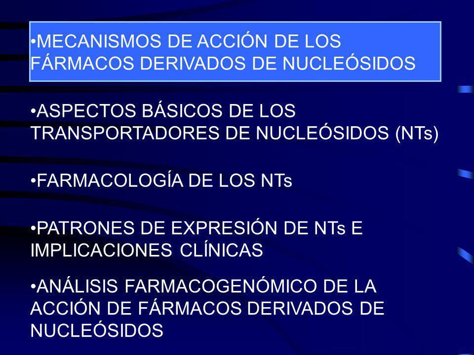 OBJETIVO Utilizar la técnica de microarrays de DNA para: Profundizar en las bases moleculares de la acción farmácológica de los análogos de nucleósidos Profundizar en las bases moleculares de la acción farmácológica de los análogos de nucleósidos Estudiar el papel de los transportadores de nucleósidos en la acción de los análogos de nucleósidos Estudiar el papel de los transportadores de nucleósidos en la acción de los análogos de nucleósidos Efecto del 5DFUR en células MCF7 (tumor de mama) Inhibición del transportador ENT1 con NBTI
