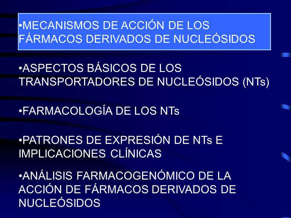 Cytidine2-deoxycytidineddC Selectividad farmacológica de hCNT1 Cano-Soldado, P., Larráyoz, I., Molina-Arcas, M., Casado, F.J., Martínez-Picado, J., Lostao, M.P., Pastor-Anglada, M.