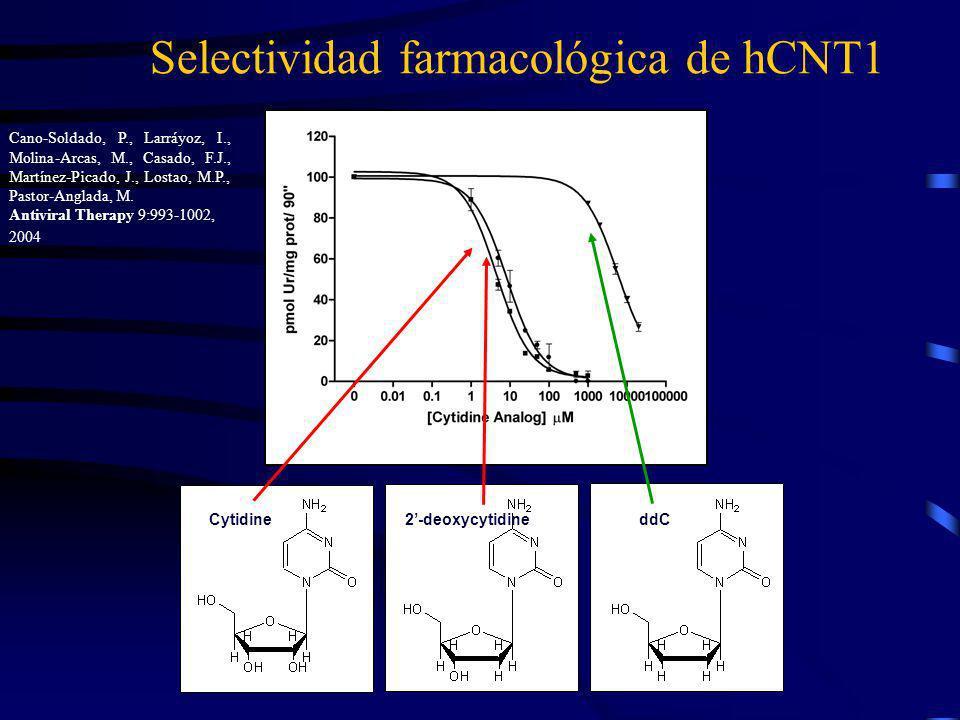 Cytidine2-deoxycytidineddC Selectividad farmacológica de hCNT1 Cano-Soldado, P., Larráyoz, I., Molina-Arcas, M., Casado, F.J., Martínez-Picado, J., Lo