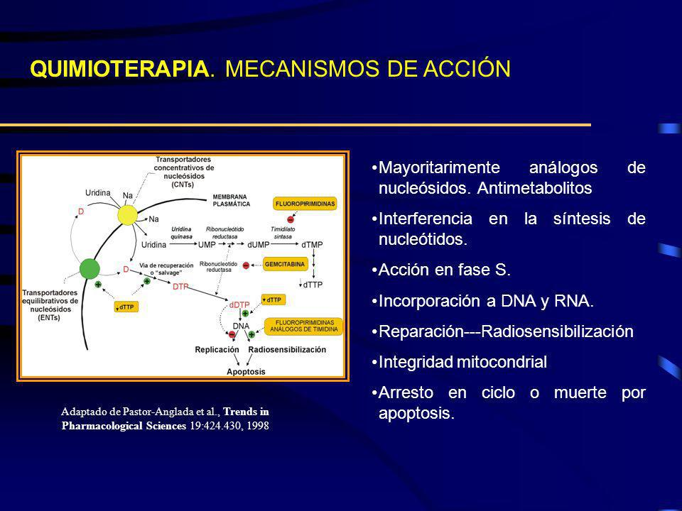 QUIMIOTERAPIA. MECANISMOS DE ACCIÓN Mayoritarimente análogos de nucleósidos. Antimetabolitos Interferencia en la síntesis de nucleótidos. Acción en fa