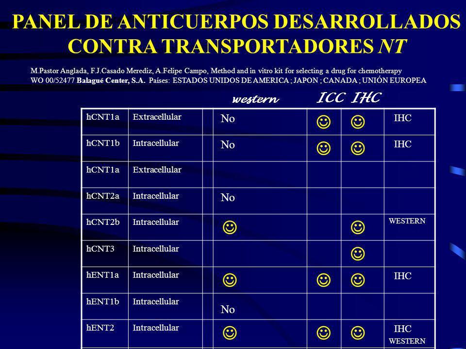 PANEL DE ANTICUERPOS DESARROLLADOS CONTRA TRANSPORTADORES NT hCNT1aExtracellular No IHC hCNT1bIntracellular No IHC hCNT1aExtracellular hCNT2aIntracell