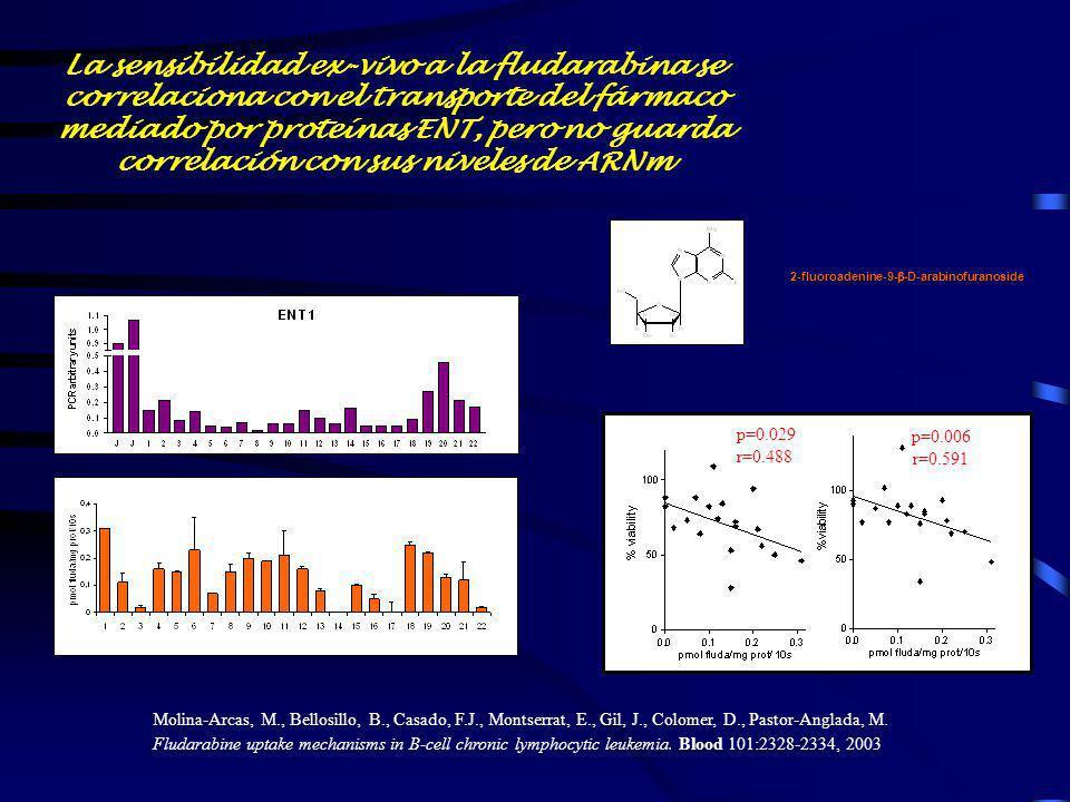 2-fluoroadenine-9- -D-arabinofuranoside La sensibilidad ex-vivo a la fludarabina se correlaciona con el transporte del fármaco mediado por proteínas E