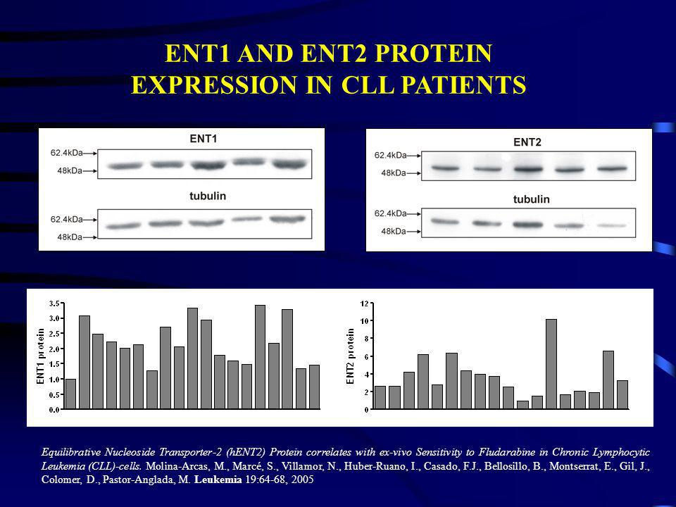 ENT1 AND ENT2 PROTEIN EXPRESSION IN CLL PATIENTS Equilibrative Nucleoside Transporter-2 (hENT2) Protein correlates with ex-vivo Sensitivity to Fludara
