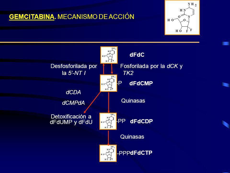 CONDICIONES ELEGIDAS PARA LOS ESTUDIOS FARMACOGENÓMICOS 5-DFUR 250 M NBTI IC75 + NBTI IC50 5-DFUR 250 M NBTI IC75 + NBTI IC50 90 minutos de tratamiento 90 minutos de tratamiento +/- NBTI 100 nM (pre-incubación 30 min) +/- NBTI 100 nM (pre-incubación 30 min) Efecto a tiempos cortos 4h y a tiempos largos 24h Efecto a tiempos cortos 4h y a tiempos largos 24h 8 condiciones experimentales control control NBTI 100nM NBTI 100nM 5-DFUR 250 M 5-DFUR 250 M 5-DFUR 250 M + NBTI 100nM 5-DFUR 250 M + NBTI 100nM 4 y 24 horas postratamiento arrays 2 experimentos independientes 2 experimentos independientes marcaje Cy3 y Cy5 marcaje Cy3 y Cy5 32 arrays