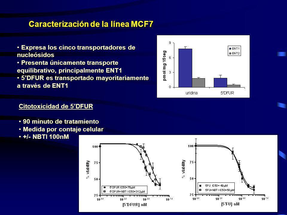 Caracterización de la línea MCF7 Expresa los cinco transportadores de nucleósidos Expresa los cinco transportadores de nucleósidos Presenta únicamente