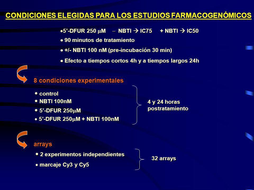CONDICIONES ELEGIDAS PARA LOS ESTUDIOS FARMACOGENÓMICOS 5-DFUR 250 M NBTI IC75 + NBTI IC50 5-DFUR 250 M NBTI IC75 + NBTI IC50 90 minutos de tratamient